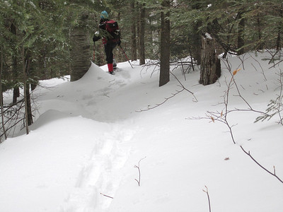 Lovely bit of trail through the woods... the snow was deeper in other spots.