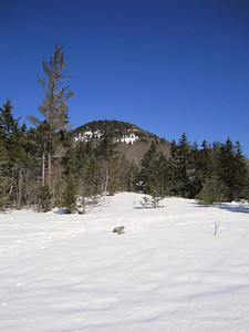 View of Mt. Welch from the ledges