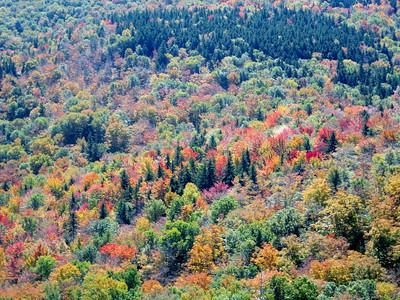 Trees -- horizontal