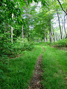 This is not a trail you want to take if you're allegeric to poison ivy