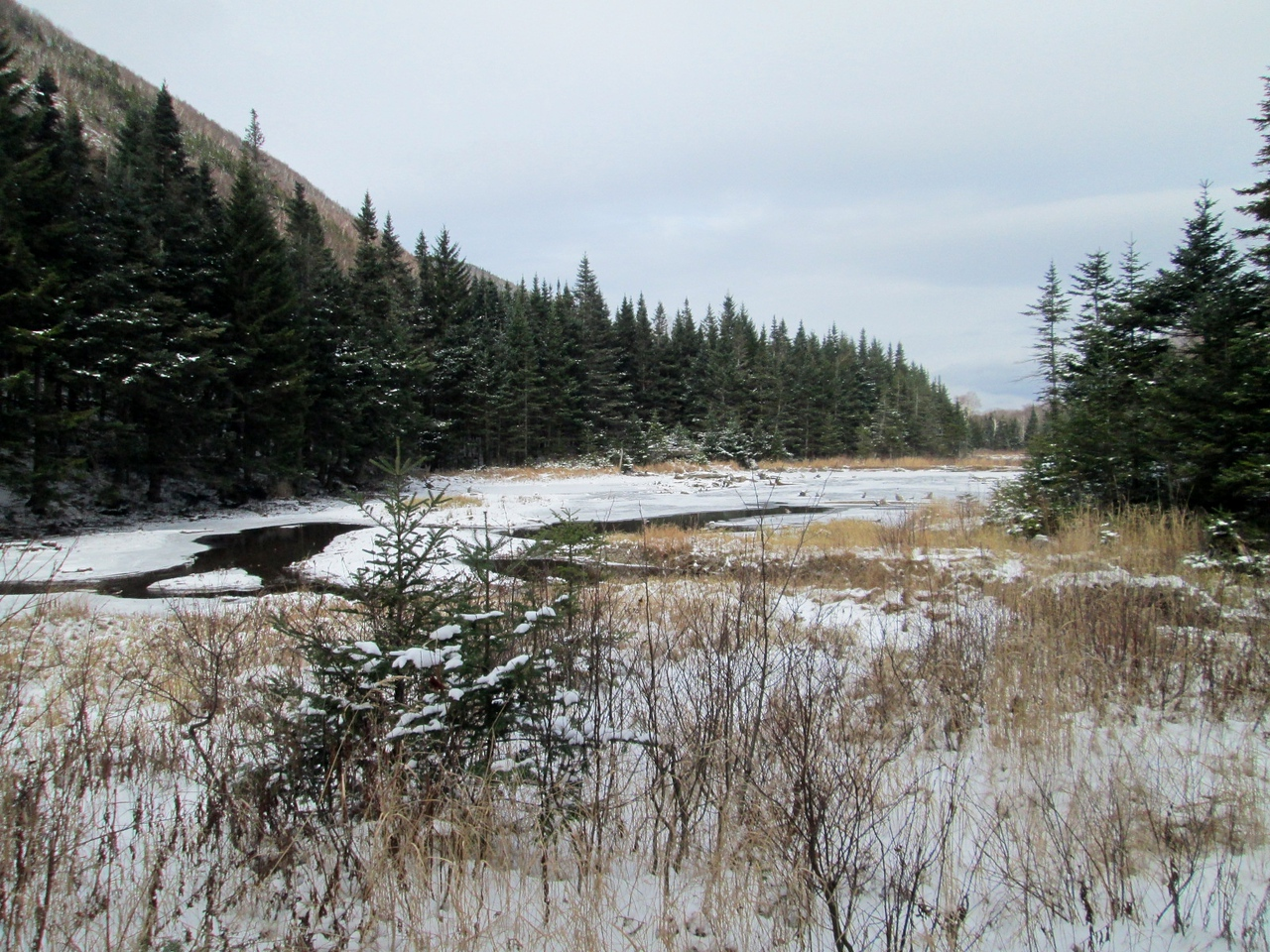 Another beaver pond with the shoulder of Mt. Clough behind it.