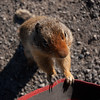 <b>30 July 2011</b> The Rock Isle Lake ground squirrels are a wee bit too camera un-shy
