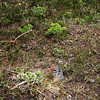 <b>2 July 2010</b> A suspicious ground squirrel slowly re-emerges from his hole