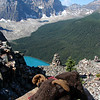 Russell the Moose turns his back on the view out to Moraine Lake and the Valley of the Ten Peaks