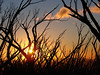 Sunset through the burnt snow gums