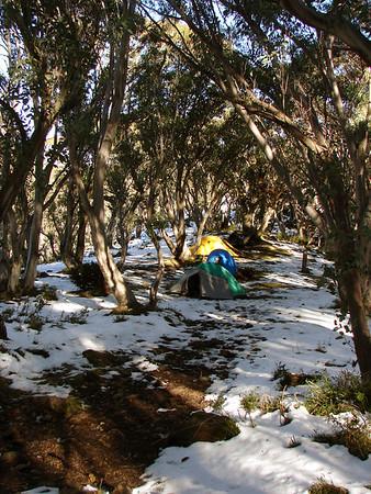 2006.05-13-14: Mt Howitt hike