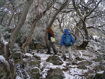 2006.06.25: Mt Torbreck hike