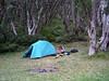 Megan loiters near the tent