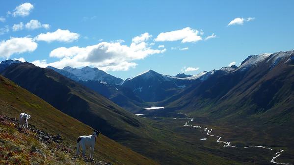 Harp Mountain, 9 Sept 12