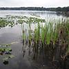 More marsh grass