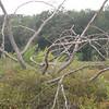 A twisty, tangly dead tree.