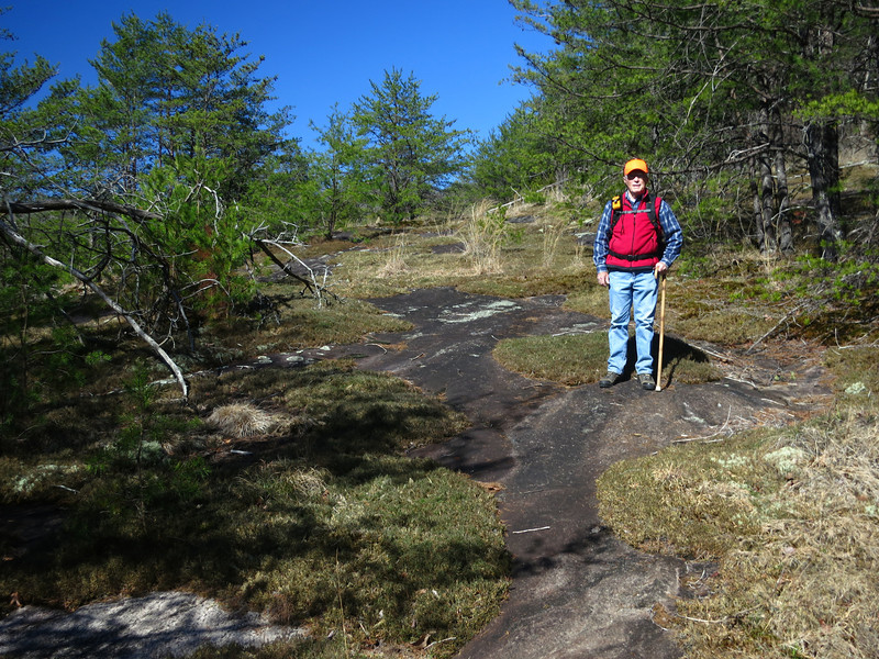 Following the drainage to the top of the ridge, we emerged from a cove of mixed hardwoods and laurel to a massive granite outcropping with moss and dwarf pine.