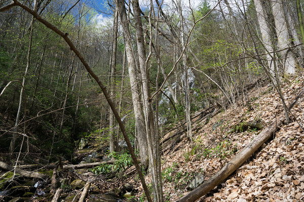 With no trail, I bushwhacked a short distance upstream along Frogtown Creek, crossed a tributary and headed up the cove along the River Left side of the tributary.  Within a 100 yards, a big  waterfall came into view.