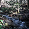 It is nice to see water in the creeks, again.  The logging road is still there but, it is getting harder to discern.