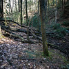 """After passing the tributary and """"Trail Head"""", the logging road you have been following begins to deteriorate."""