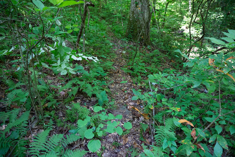 """The level bottom land you have been hiking  goes away as the creek narrows and begins to climb.  A """"trail"""" shows up (for a while)"""