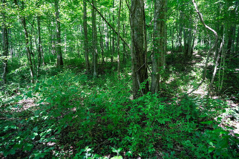 Head west through the semi-open woods.