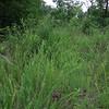 More weeds.