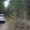 "Road #122 begins in a forest of juvenile white pine.    Graveled with # 1 stone (2"" to 4""), the road is drive-able."