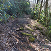 The trail is an old logging road that follows Darnell Creek.