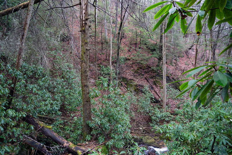 Looking out over the lower drop, the mountainside is open but VERY steep!  I looked around a bit on the mountainside  behind me and found an ancient logging road higher up. I think I will be able to use that road to get around the waterfall and on up the creek.