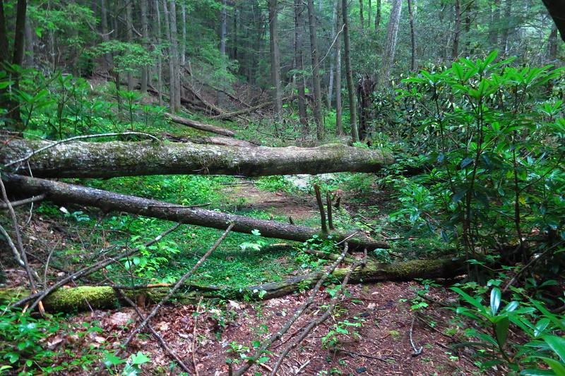 Also immediately, downfalls block the trail.