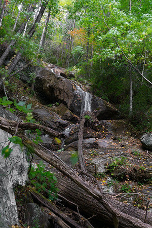 Hike to Chinquapin Branch 2.0