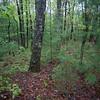 Bushwhack south /southeast down a broad ridge.