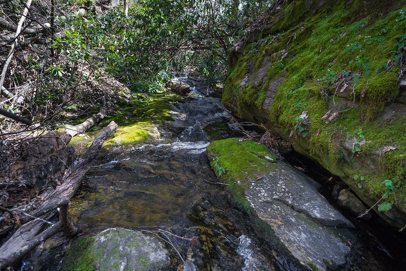 I crossed the creek and began scaling the mountain side.   Here is some stuff along the creek.