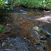 Back in the creek, this beautiful rock is just downstream  from the first significant waterfall.