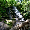"""Following up on another """"tip"""" from Greg Ford, I explored a tributary below Tabor Falls in the Lake Russell Wildlife Management Area (LRWMA)."""