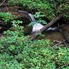 A teaser waterfall. (bigger stuff upstream?)