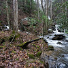 I hiked through a large flat area and crossed the creek a couple of times before arriving at the junction of two streams.   I would have taken more pictures of the route but because of the interment rain, I had  put my camera away.