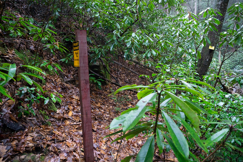 After a short steep climb, a tight squeeze between two old logs laying across the trail, and passing by the State Park Boundary, the logging road becomes more difficult.