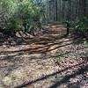 Walk around the gate and hike down the wide, well maintained Forest Service road.