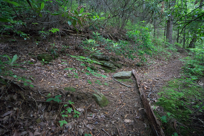 """This trail connects with a trail indicated by a dotted line on the topo . This latter  trail goes to the original """"Upper Falls"""".  The """"new"""" trail is a faint skid path up the side of the mountain.  The log and rock on the trail in the picture above, would seem to indicate that the hiker should go left at the junction.  I went straight ahead."""