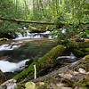 """Not far upstream, England Camp Branch splits with the primary fork going left.  The right hand fork has been unofficially named """"North Fork"""" and, according to Greg Ford, has several waterfalls.  Wow!   Another exploration in in the queue!"""
