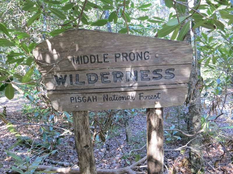 Walked down the Hwy  a little ways and turned left on the white blazed MST.  Immediately, we entered the Middle Prong Wilderness.