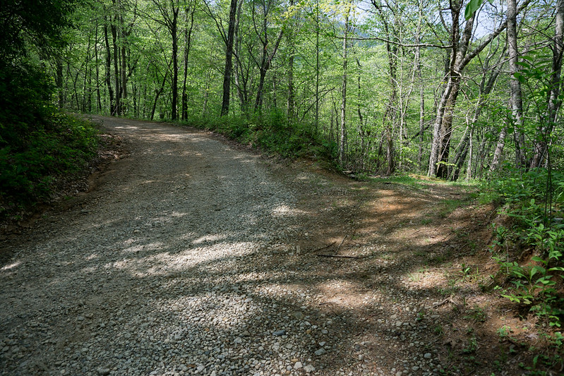 The logging road is in the outside bend of Patterson Gap Road at 2.0 miles.