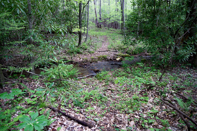 The logging road descends slowly and crosses Patterson Creek .  The easily discernible logging road will continue following the creek down stream.  But,  after you cross this creek,  you need to look for an older logging road that leads up the hillside to the left.
