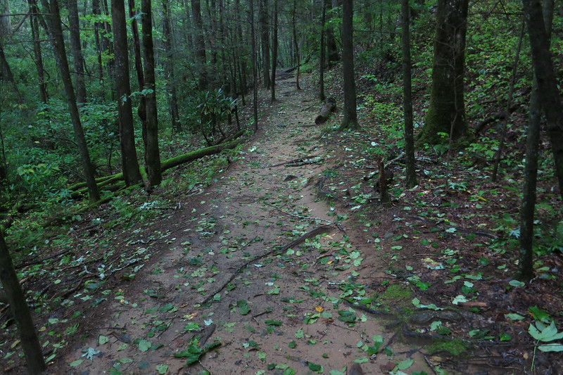 Mostly, the trail didn't even have small sticks, just leaves.