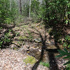 """You cross several feeder streams as the major tributary begins to gather water from every nook and cranny on the mountain. (I call the unmarked tributary  """"Second Prong"""",  since there is a named """"First Prong""""  on Keener Creek)"""