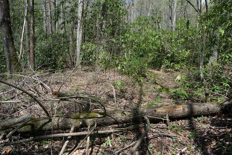 This hike provides an excellent comparison of the effects of climatic differences between northern slopes and southern slopes of these mountains.  The northern slope is clean open woods; the southern slope is a tangle of under story and blow downs.