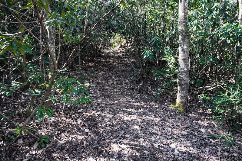 After  meandering around through some flat, bottom land, the trail becomes defined as it follows an old logging road.