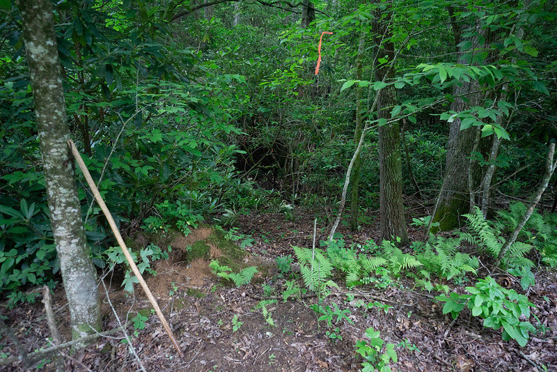 Enter the woods at creek level and this is where the bushwhacking begins.