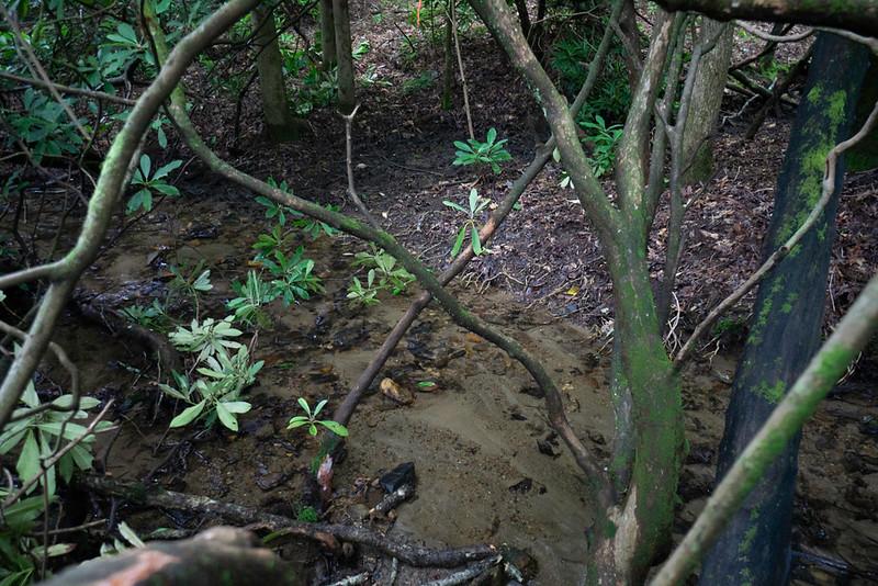 Cross the creek at 34.88763, -83.35856