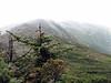 319 Looking back to Mt Adams