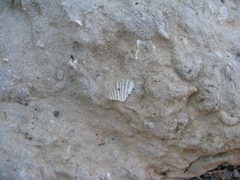 more shell pieces in rock