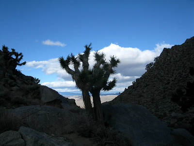 Joshua Mt- Coso Range 3-3-18