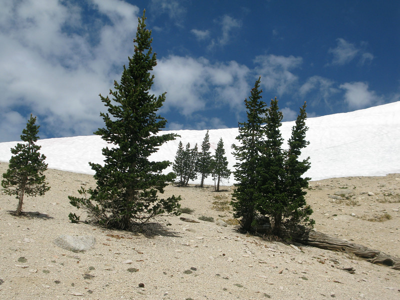 Heading up to snow bank behind camp